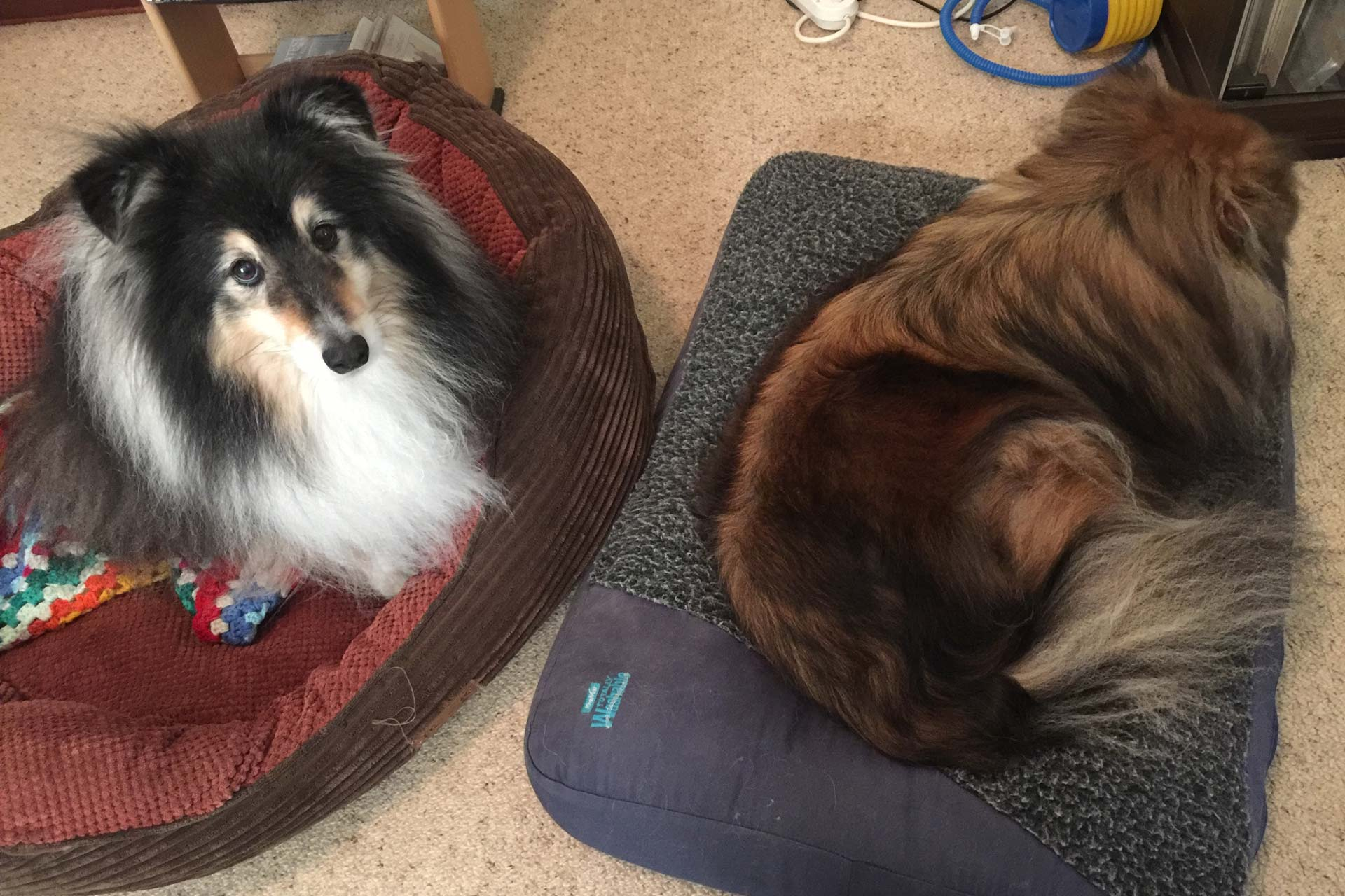 Perth Pet Sitting, Dogs on Mats