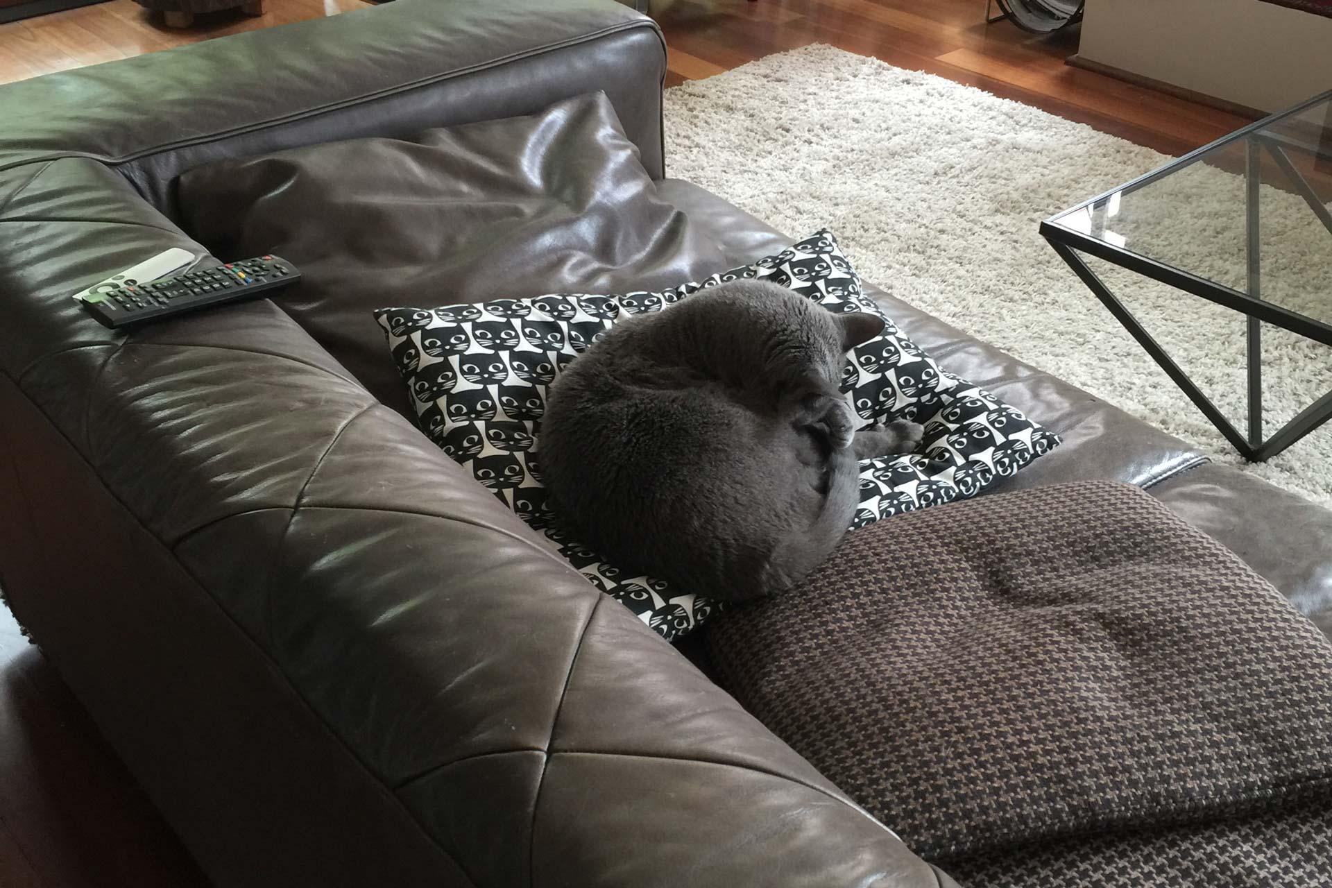 Cat on Couch, Cat Sitting Perth